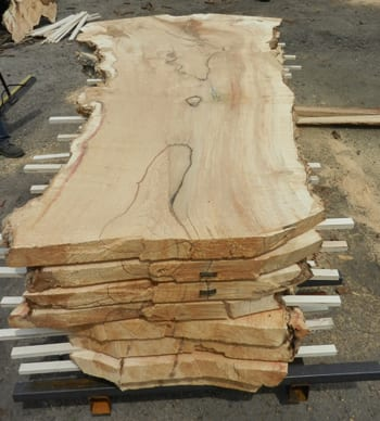 Box Elder Slab from Reclaimed Tree