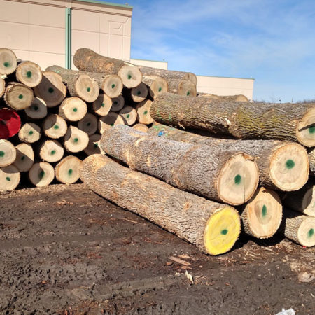 Reclaimed Urban Trees Wood From the Hood Minneapolis Twin Cities