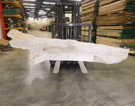Silver Maple Live Edge Slab Wood From the Hood Minneapolis