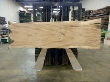 American Elm Wood Slab Wood From The Hood