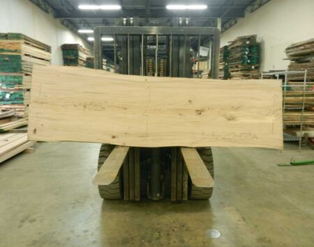 American Elm Wood Slab Wood From The Hood