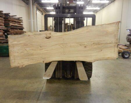 "American Elm Natural Edge Slab #1-4-21-04 (112"" x 34"" x 2.125"")"