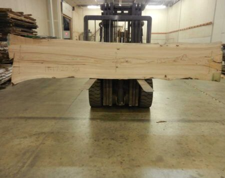 "American Elm Natural Edge Slab #11-17-20-02 (155"" x 33"" x 1.75"")"
